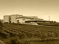 Terras Gauda Winery in O Rosal surrounded by vineyards